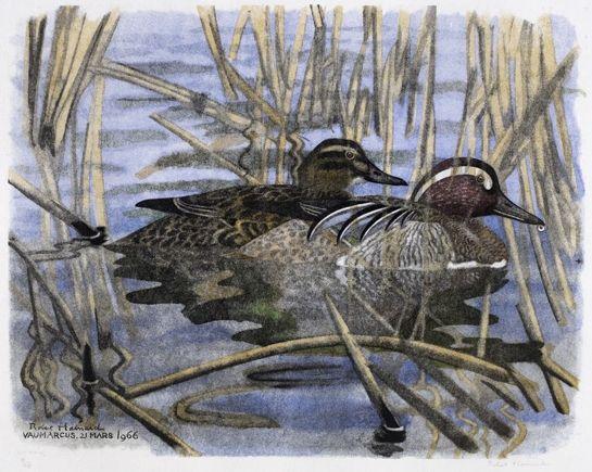 Couple de Sarcelles d'été 21.3.1966, Vaumarcus Robert HAINARD Oiseaux 28 x 35,7 cm Oiseaux Gravure sur bois n° 419 Sarcelle d'été - Anas querquedula - Knäckente - Garganey - Marzaiola Observation Vaumarcus (lac de Neuchâtel), 21.3.1966 duck bird