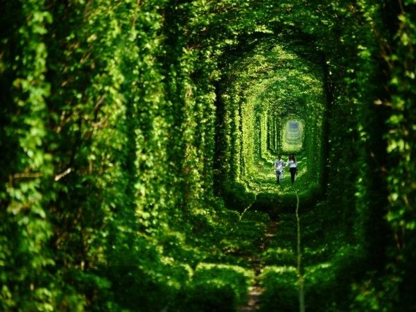 the romantic Tunnel of love in Ucraine