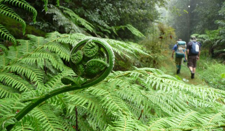 New England Wilderness Walk, New England National Park, Australia - want to do this one!!