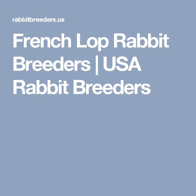 French Lop Rabbit Breeders | USA Rabbit Breeders