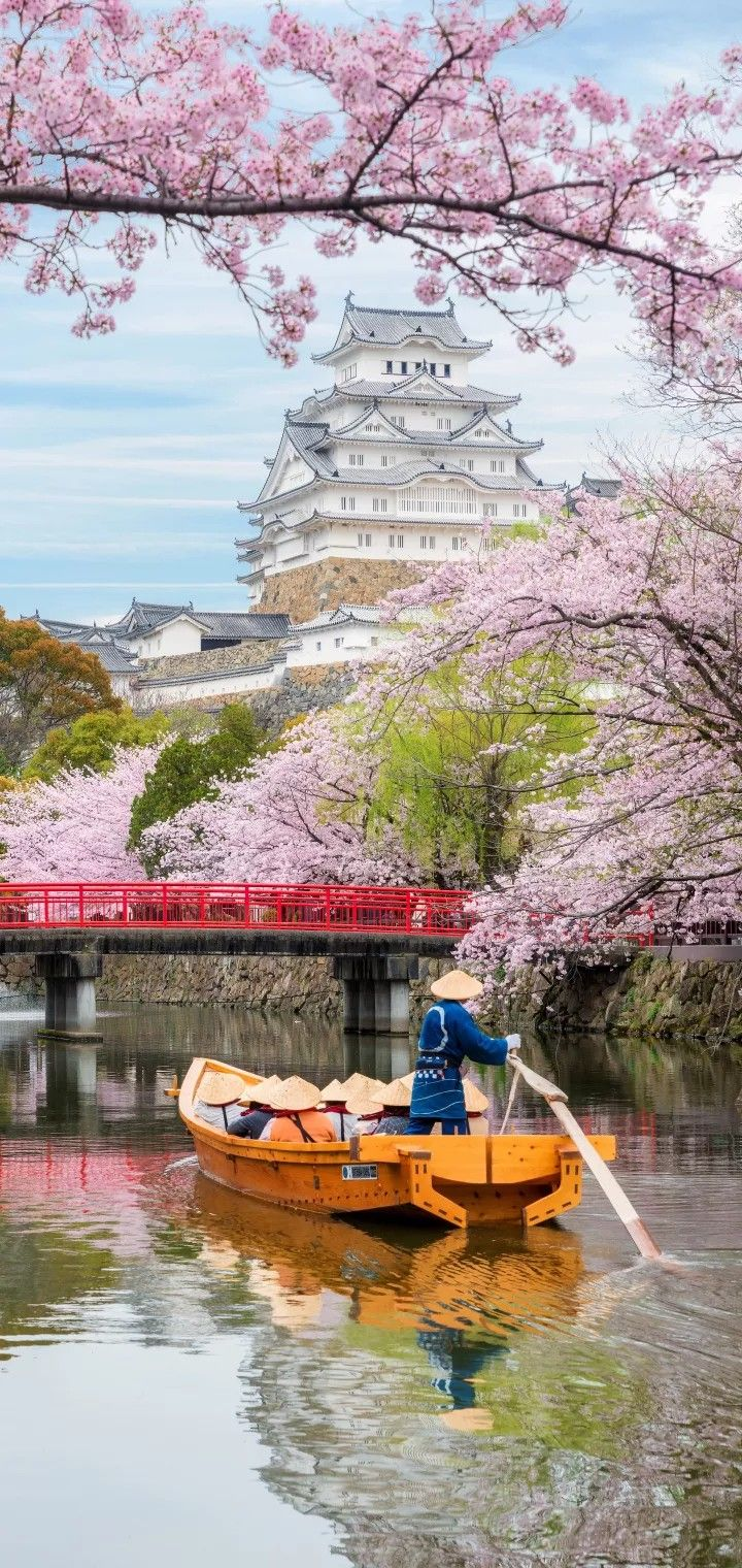 Best Places To See Cherry Blossom Abundance Of Pink Sakura Over The Beautiful Mountain Is A Typical Phenomen Japan Aesthetic Japanese Castle Wonderful Places