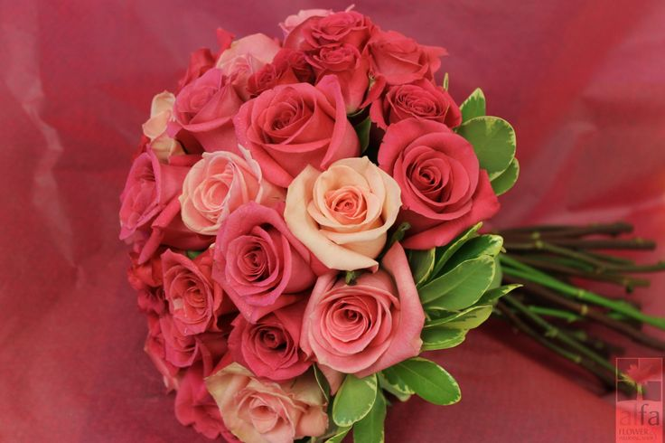 The most beautiful shades of pink roses.