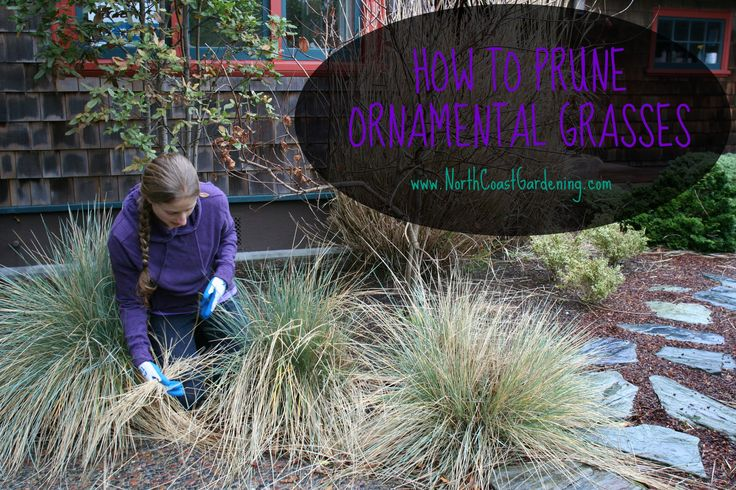 Stop! Don't Prune That Grass (How to Prune Ornamental Grasses Right)