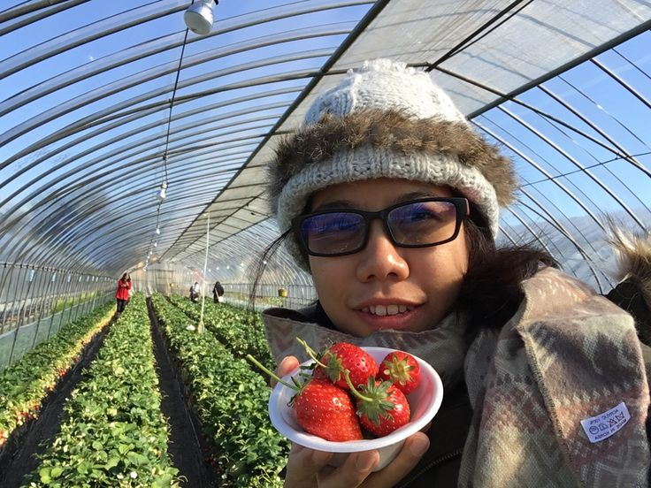 Update Blog : [airbnb] Strawberries picking เก็บสตรอเบอรี่กินเองที่ Tochigi : Winter in Japan 2016 Past 1 #Japan #Tochigi #Strawberry