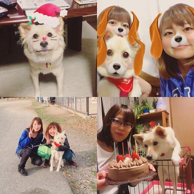 🎄 Merry Xmas & Happy Birthday ・・・ #1223 #モカ #愛犬 #雑種 #姉 #誕生日 #クリスマスイブ #一緒にお祝い #おめでとう #姉妹 #三姉妹 #snow #🎄 #🐕