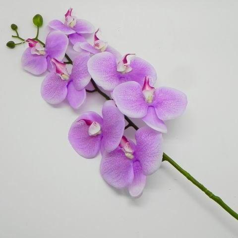 Orchidej umělá sv.fialová