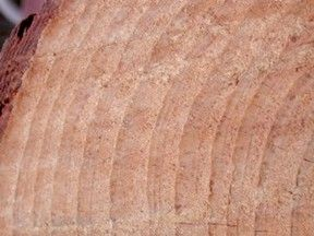 Dendrochronology (or tree-ring dating) is the scientific method of dating tree rings (also called growth rings) to the exact year they were formed in order to analyze atmospheric conditions during different periods in history.