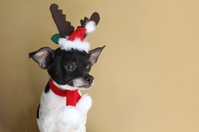 Reindeer ears for dog or cat for christmas. $14.50, via Etsy.
