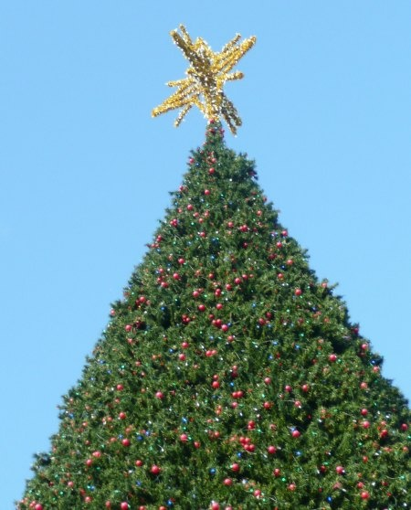 23 best Christmas in Delray images on Pinterest Delray beach