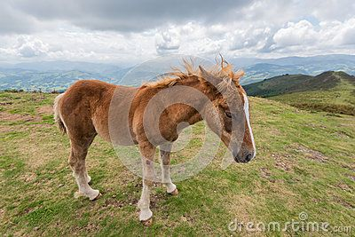 A young foal walking in the mountain with a blue cloudy sky