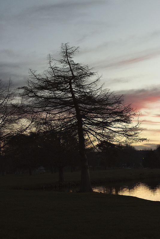walk in the park | by ohmereyann