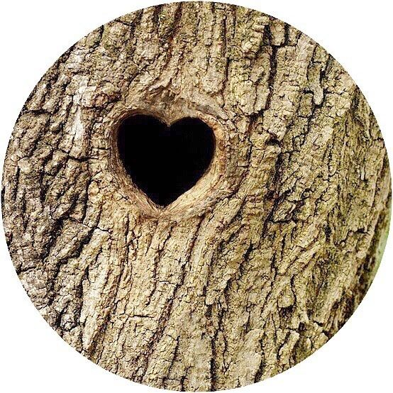 Trees have hearts!! Love is all around us  If we are told to love ourselves then we are ought to love the Earth because we are made of the same star dust!!  __ Happy are the Pure in Heart. Mathew 5:8