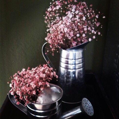 Paniculata rosa para decorar