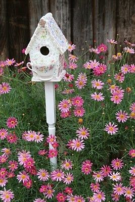 love this Birdhouse and the pink Coreopsis