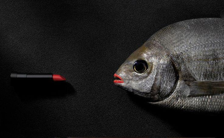 Les 43 meilleures images du tableau photographie culinaire for Dose nourriture poisson rouge