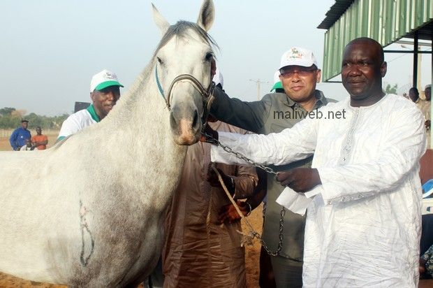 """Nioro horse. There is not any information available of this horse. Maybe is another variety of Barb origin in Mali. There are only references about it referring to races, very popular in the country. Fédération Malienne des Sports Equestres : Le drapeau du Grand Prix de PMU-Mali remporté dimanche dernier par """"Mansour"""" de Moulay Idriss Haïdara"""