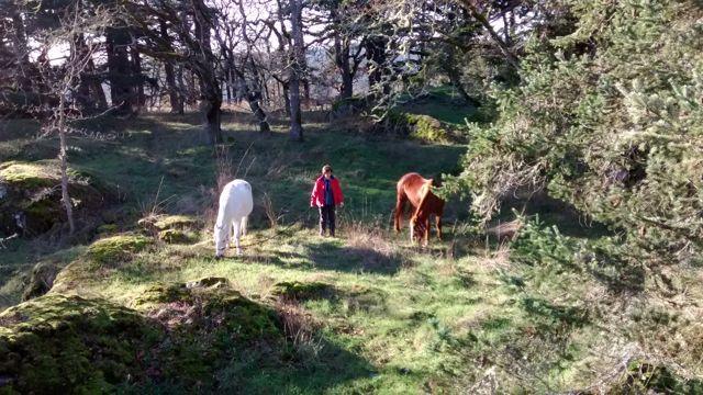 Walking through Devonian Park in winter...