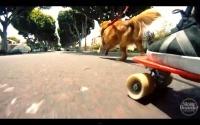 Esta frase Go Skate With A Friend foi uma introdução da revista a algum tempo atras, com Matt andando de skate com seu cão, a versão de 2012 da intro filmada com uma câmera GoPro.