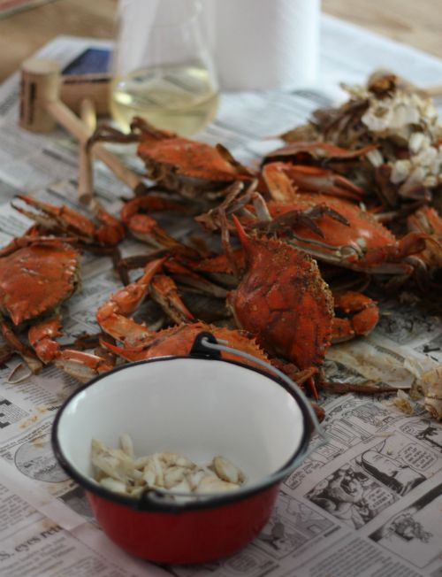 How To: Pick Blue Crabs - Aftertaste by Lot18: Blue Crabs, Cooking Chesapeake, Chesapeake Bay, Coastal Bays, Recipes Norfolk Va, Bays Cooking, Picking Crabs