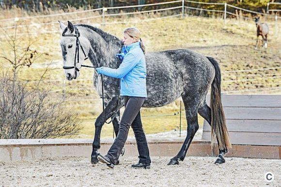 Klassische Handarbeit ist wunderbare Gymnastik fürs Pferd. Und die Basics sind leichter zu lernen, als Sie vielleicht denken. CAVALLO-Redakteurin Barbara Böke ließ sich von Ausbilderin Kathrin Roida an die Hand nehmen. Machen Sie mit!