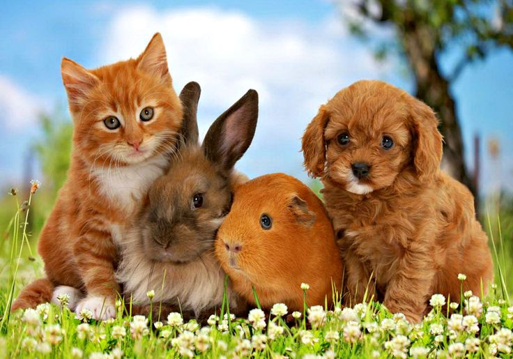 cat and dog and rabbit and gine pig - - Yahoo Image Search Results