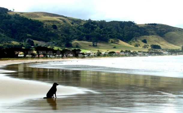 APOLLO BAY - Favourite Holiday Spot as a kid (and still is.......)