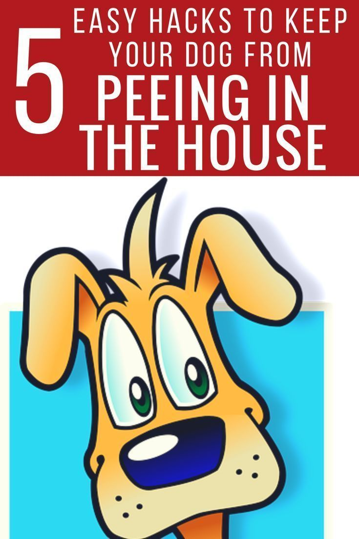 Check out these 5 easy hacks to keep your dog from peeing in the house or on the carpet