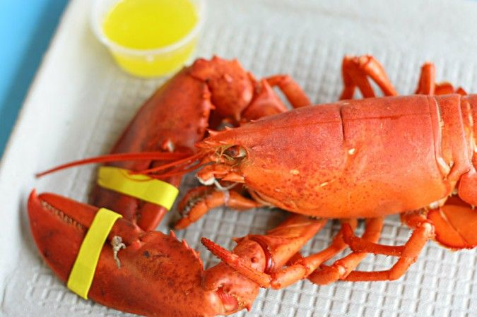 The 12 Best Lobster Shacks in New England!