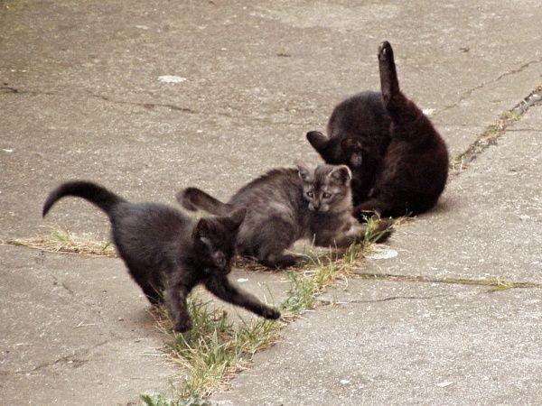 Kočkohrátky