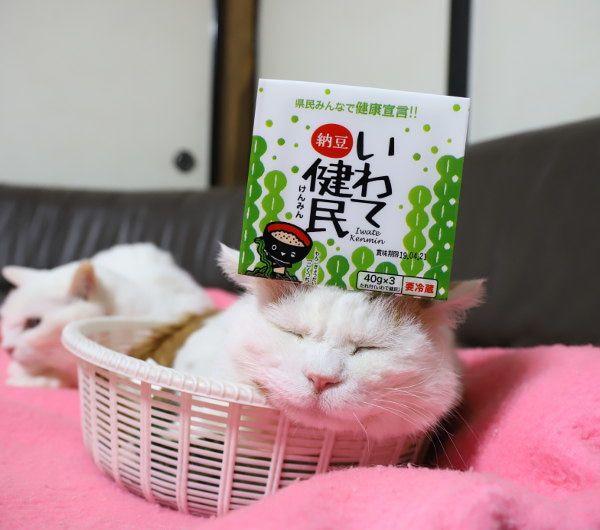 のせ猫 岩手健民 猫 かご猫 岩手