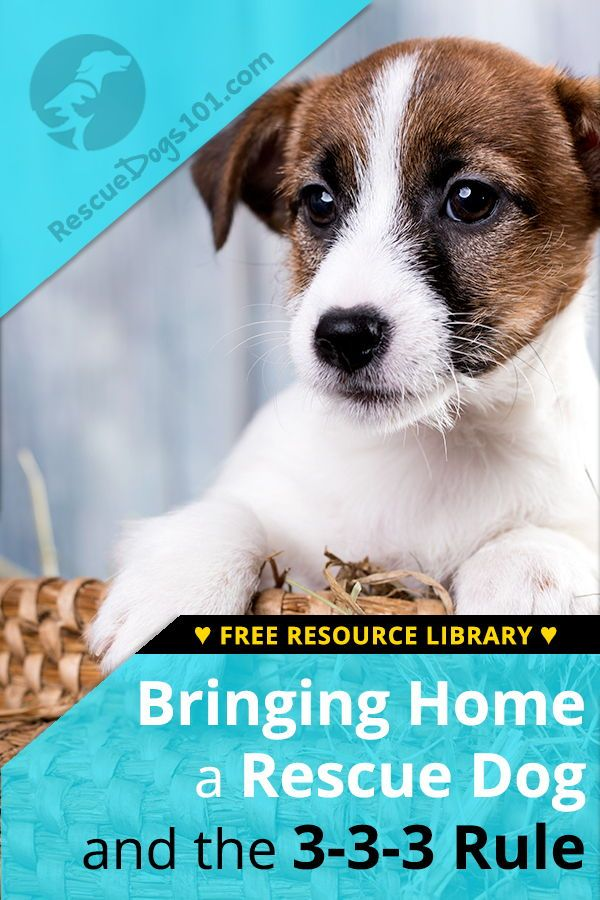 Bringing Your New Dog Or Puppy Home And The 3 3 3 Rule Rescue