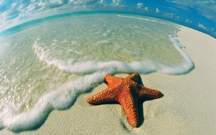 Morze, Plaża, Rozgwiazda