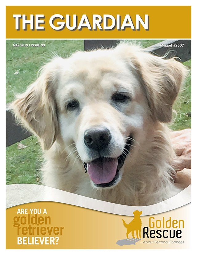 The Guardian Newsletter Golden Retriever Rescue Rescue Dogs