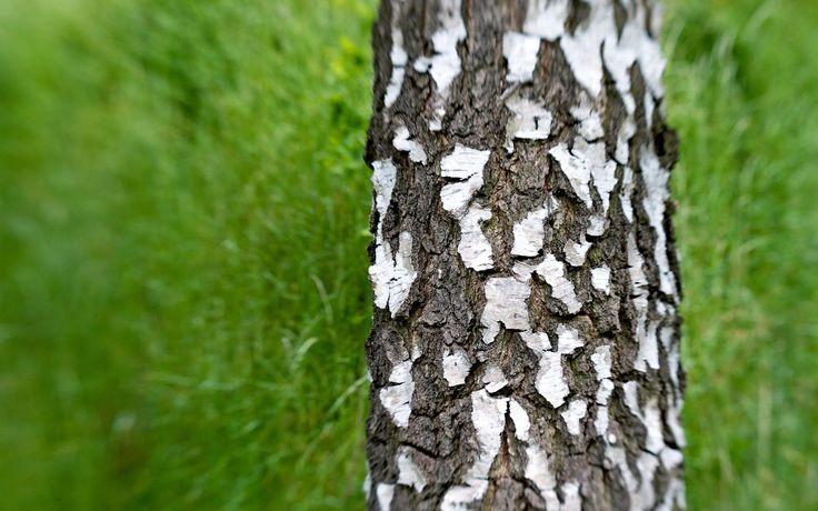 Fond d'écran hd : nature arbre
