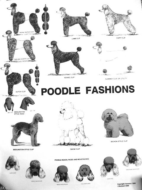 poodle cuts. If I ever get a poodle(I probably will because they're so sweet) I will probably try every cut on them.
