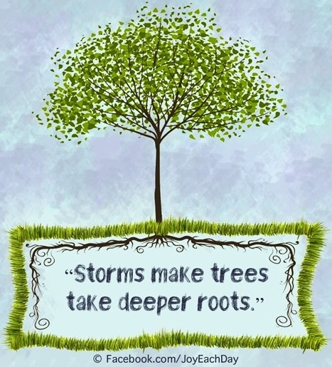 storms make trees take deeper roots via