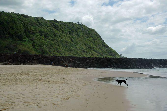 Tallebudgera Dog Beach Palm Beach North