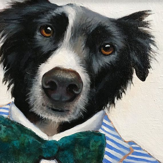 1000 Images About Border Collies On Pinterest