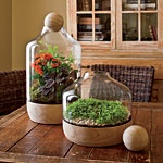 Gartenarbeit drinnen unter Glas :)   – terrariums
