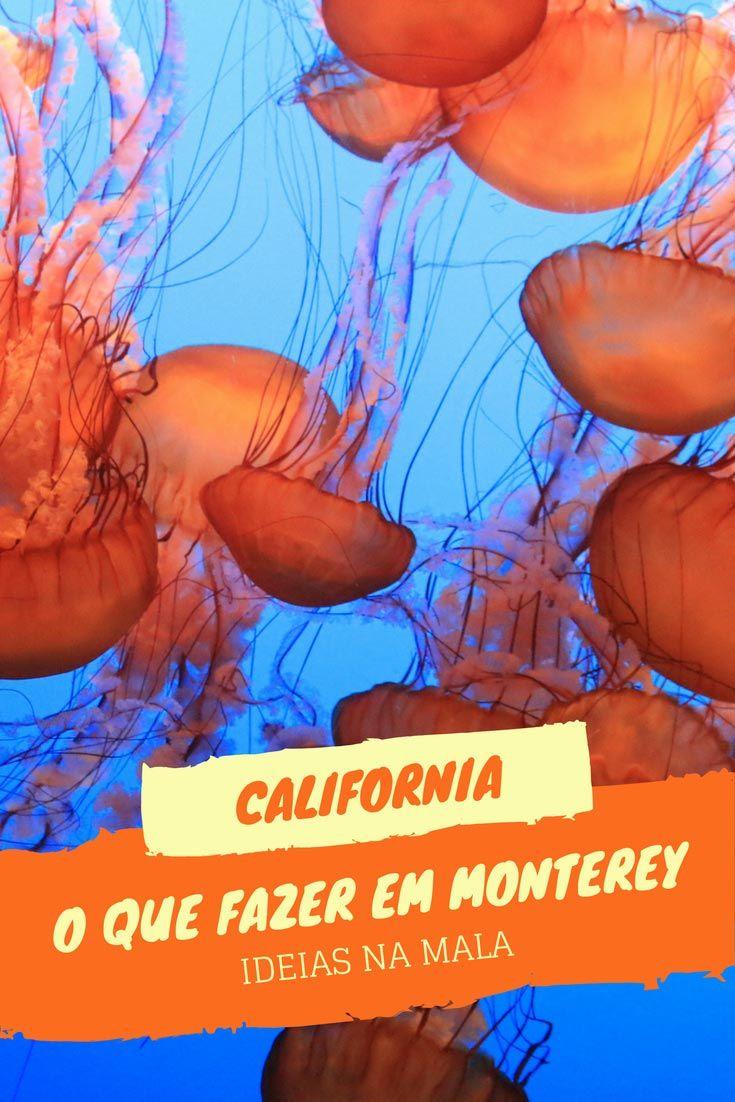 Saiba o que ver e fazer em Monterey, uma das principais paradas de quem percorre a Highway 1 pela Costa da Califórnia. Monterey tem um aquário maravilhoso, passeios para observação de baleia, uma rua fofíssima - a Cannery Row - e muito mais. Veja dicas incríveis nesse post.