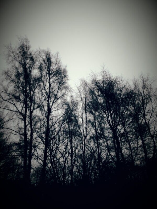 trees taken by ginge on the 12/12/16 Walsall wood I've put the original photo up I've changed this photo to vintage