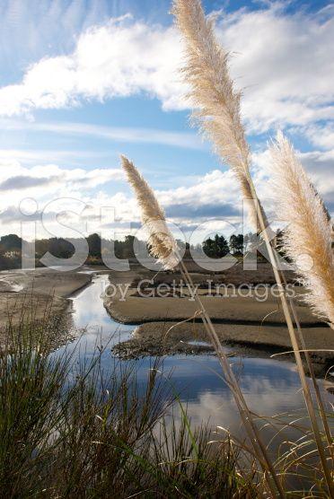 'Toitoi' or 'Toetoe' Grass, Mapua Estuary, NZ royalty-free stock photo