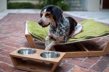 Mooie ligplek in de achtertuin voor de hond