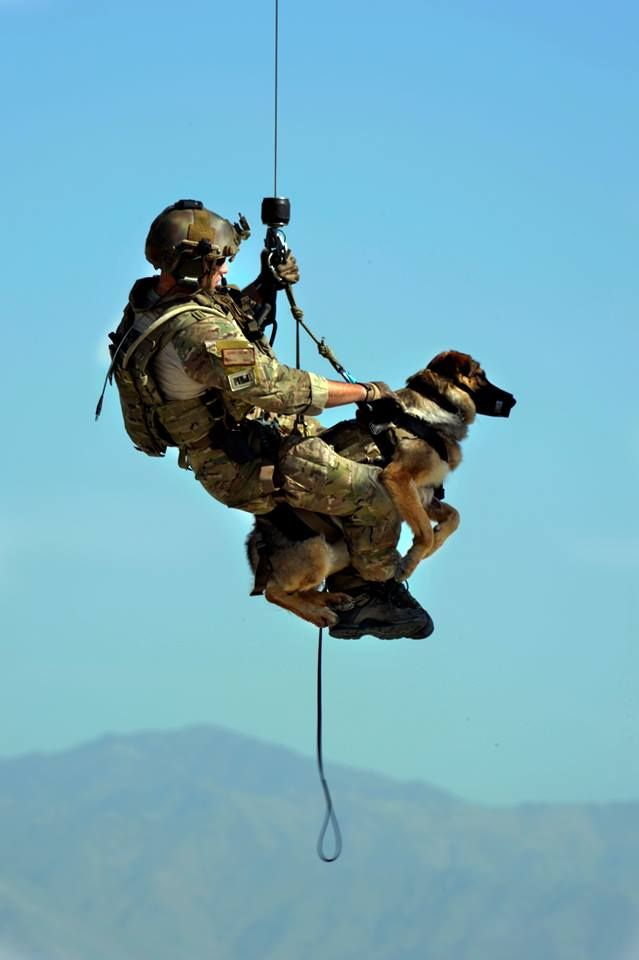 Airman 1st Class Jason Fischman, 83rd Expeditionary Rescue Squadron pararescueman, hoists an U.S. Army tactical explosive detection dogs into a HH-60G Pave Hawk helicopter during a joint rescue training scenario at Bagram Airfield, Afghanistan, June 21, 2013. This training was a first for both branches and prepared them for future rescue missions. Fischman is deployed from Royal Air Force Lakenheath, England. (U.S. Air Force photo/ Staff Sgt. Stephenie Wade)