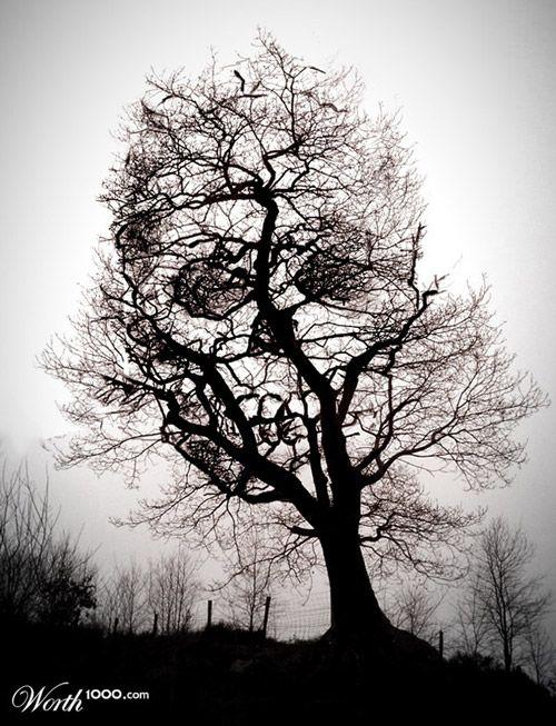 """Sarah- """"il pensait que c'était un spectateur, mais lorsqu'il l'a vu de près, il s'est rendu compte que cet effrayant personnage avait un tête de mort à la place du visage!"""" Je choisi ce image et citation (la citation est par le premier chapitre en page 7) parce que au derrière de l'arbre il y a un tête de mort mais s'est couverte par l'arbre. C'est comme le fantôme il a toujours couverte sa visage avec un masque."""