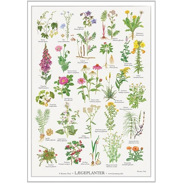 Lægeplanter Plakat