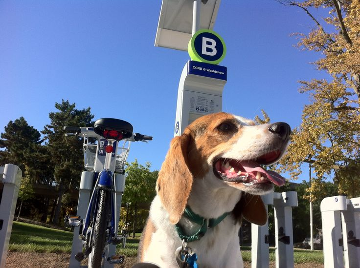 Bike Ann Arbor! Visiting A2? You can rent a bike for as little as $6 a day. Treetown is bike friendly