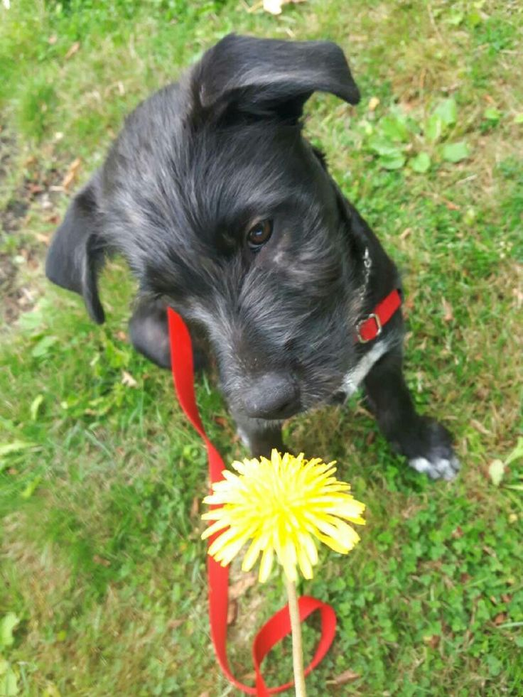 Morty discovering a dandelion.