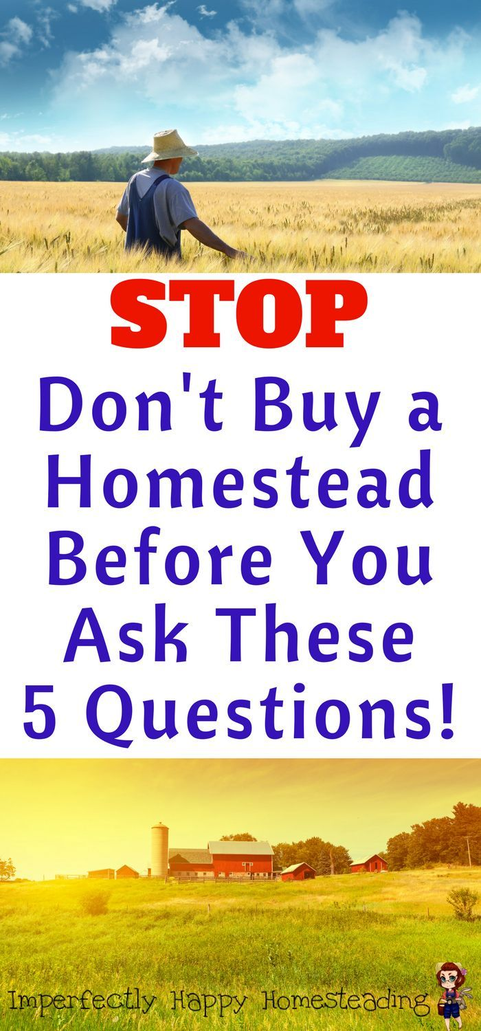 Don't Buy a Homestead Before You Ask These 5 Questions!