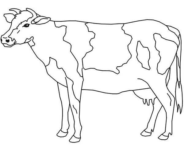 بقرة للتلوين صور بقر للتلوين جاهزة للطباعة بفبوف Cow Coloring Pages Animal Coloring Pages Animal Templates
